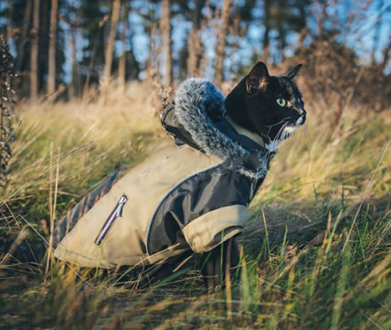 camping with a cat