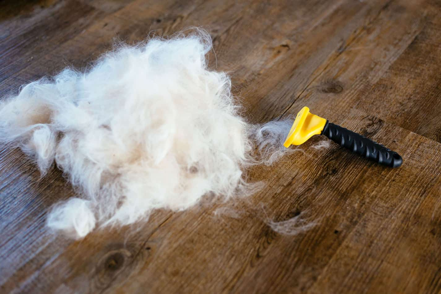 Best Cat Brush For Mats Easily Untangle Your Cat S Fur